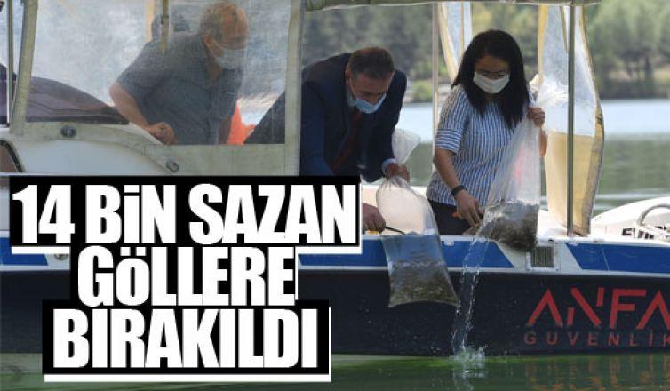 14 bin yavru sazan göllere bırakıldı!