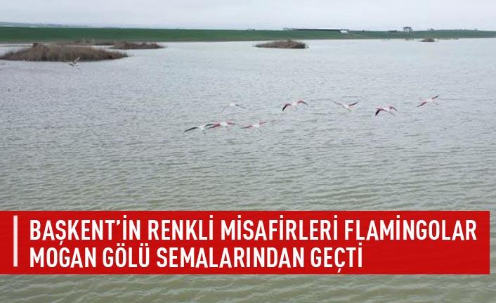 Başkent'in renkli misafirleri flamingolar mogan gölü semalarından geçti