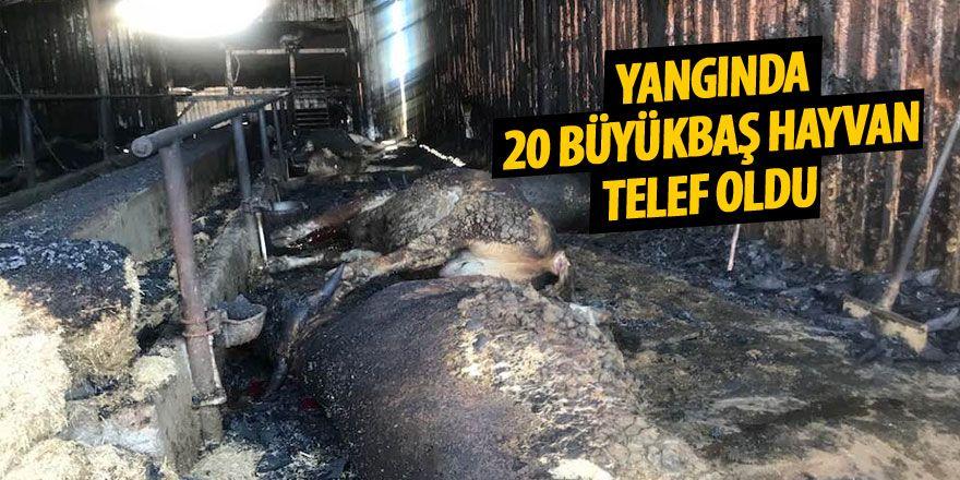Ahırda çıkan yangında 20 büyükbaş hayvan telef oldu
