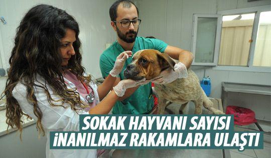 Ankara'da 100 bini aşkın sokak hayvanı yaşıyor