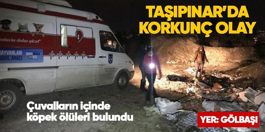 Ankara'da korkunç olay! Çuvalların içinde köpek ölüleri bulundu