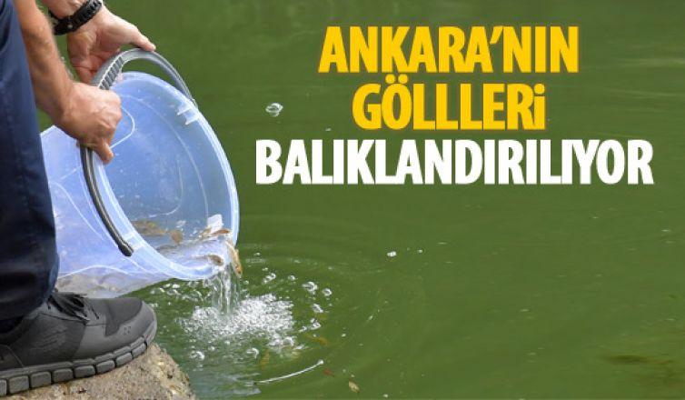 Ankara'nın göllerini balıklandırma çalışması