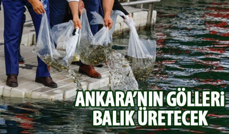 Ankara'nın gölllerine balık bırakıldı