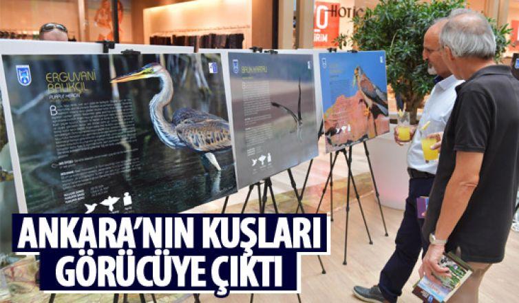 Ankara'nın kuşları tanıtıldı