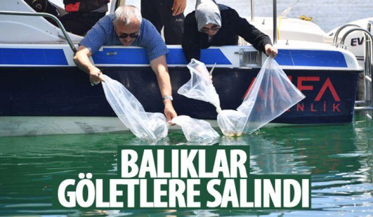 Balıklar göletlere salındı