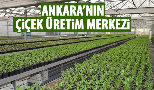 Başkent'in çiçek üretim merkezi: ANFA