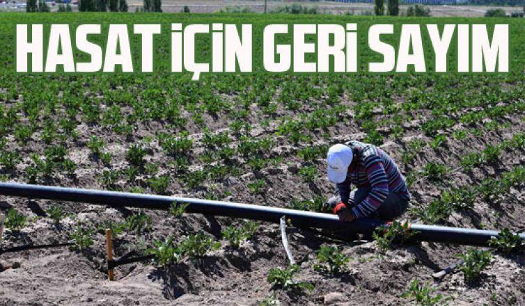 Büyükşehir arsalarında hasat için geri sayım başladı!