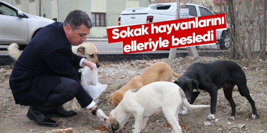 Gölbaşı Belediyesi sokak hayvanlarını unutmadı