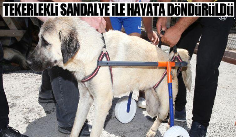 Gölbaşı Belediyesi'den engelli sokak hayvanlarına yaşam desteği…