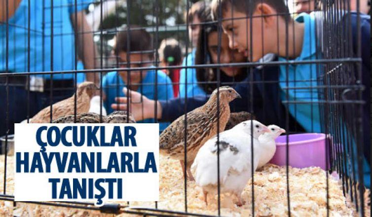 Hayvanlarla çocuklar iç içe