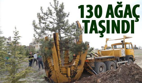 Konya Yolu'ndaki ağaçlar taşındı
