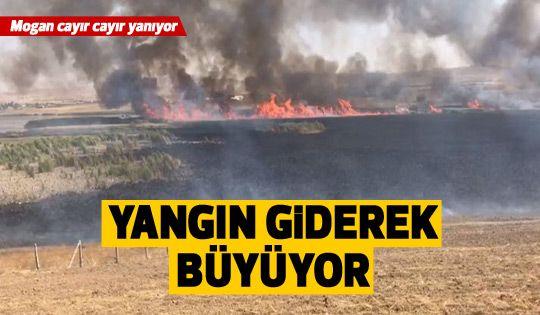 Mogan'daki yangın giderek büyüyor