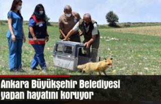 Ankara Büyükşehir Belediyesi yapan hayatını koruyor