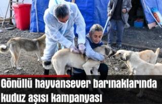 Gönüllü hayvansever barınaklarında kuduz aşısı...