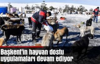 Başkent'in hayvan dostu uygulamaları devam...