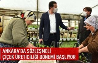 Ankara'da sözleşmeli çiçek üreticiliği...