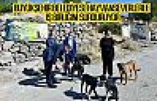Büyükşehir belediyesi hayvanseverlerle iş birliğini...
