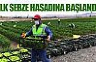 Büyükşehir'e ait tarım arazilerinde ilk sebze...