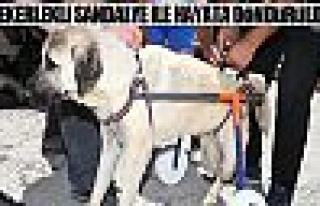 Gölbaşı Belediyesi'den engelli sokak hayvanlarına...
