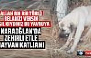 Karaoğlan'da zehirli etle toplu hayvan katliamı