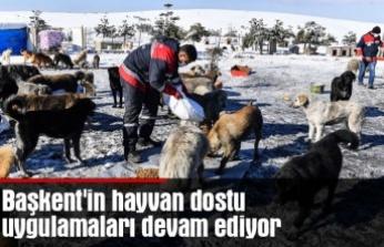 Başkent'in hayvan dostu uygulamaları devam ediyor
