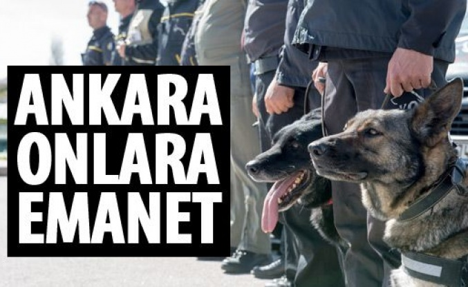 Ankara'nın güvenliğinde K-9 köpeklerinin önemi