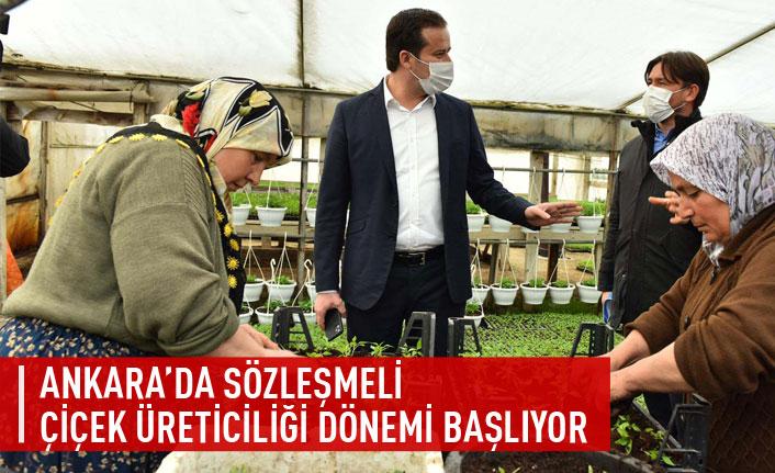 Ankara'da sözleşmeli çiçek üreticiliği dönemi başlıyor