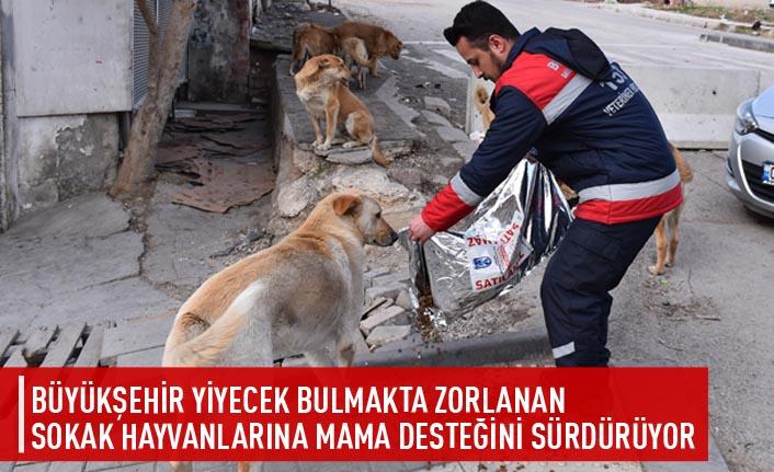 Büyükşehir yiyecek bulmakta zorlanan sokak hayvanlarına mama desteğini sürdürüyor