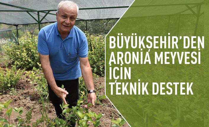 Büyükşehir'den Aronia Meyvesi için teknik destek