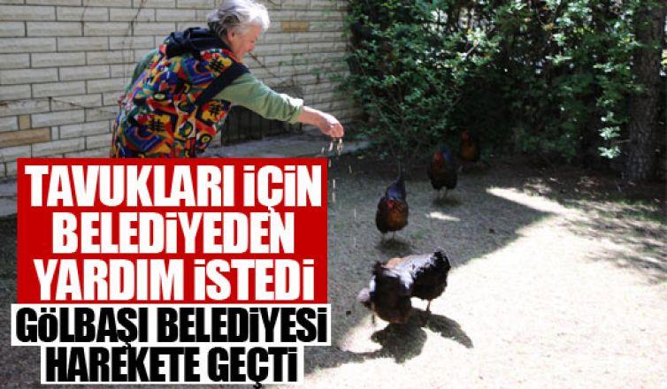 Fatma Teyze'nin tavuklarının yardımına Gölbaşı Belediyesi yetişti!