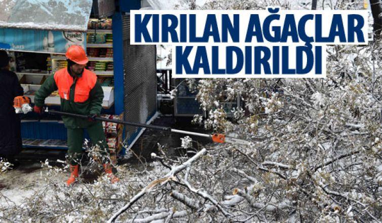 Kar yağışı sonrası kırılan ağaçlar kırılıyor