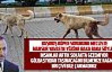 """MURAT ILIKAN: """"Başıboş sokak hayvanları yüzünden insanlar artık gezemiyor"""