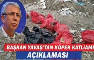 Mansur Yavaş'tan köpek katliamına ilişkin...