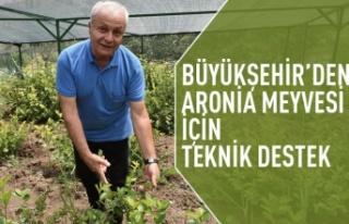 Büyükşehir'den Aronia Meyvesi için teknik...