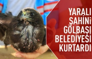 Gölbaşı Belediyesi Ekipleri Buldukları Şahin'in...